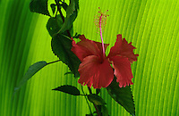 5. Flora of the World. Trees-plants-palms-mos-flowers-by-continent