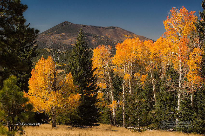 Aspens and Kendrick Peak, Arizona