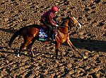 October 31, 2019: Breeders' Cup Turf entrant Anthony Van Dyck, trained by Aidan P. O'Brien, exercises in preparation for the Breeders' Cup World Championships at Santa Anita Park in Arcadia, California on October 31, 2019. John Voorhees/Eclipse Sportswire/Breeders' Cup/CSM