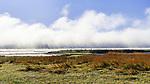 Fog rises off Hood Canal, Belfair State Park, on Hood Canal, Belfair, Washington
