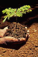 Planting Trees - Save our Environment