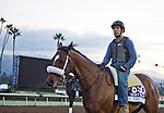 October 26, 2014:  Bronzo, trained by J.A. Inda De La Cerda, exercises in preparation for the Breeders' Cup Dirt Mile at Santa Anita Race Course in Arcadia, California on October 26, 2014. Scott Serio/ESW/CSM