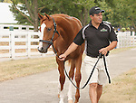 11 September 2010.  Hip #169  A.P. Indy - Madcap Escapade filly, consigned by Hill n'Dale.