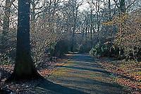 London: Hampstead Garden Suburb--the Big Wood--January 1990.  Photo '90.