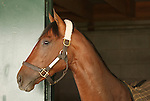 10 Apri.  Interactif is very alert in his stall on the morning of the Bluegrass Stakes.