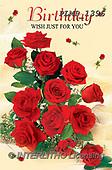 Marek, VALENTINE, VALENTIN, photos+++++,PLMP1396,#v#, EVERYDAY ,roses