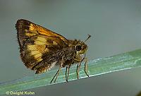 LE04-006c  Butterfly - Hobomok Skipper - Poanes hobomok