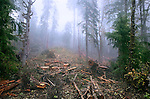 Logging cut with slash damages fragile ecology.  A sensitive creek providing salmon spawning habitat lies at the bottom of this damaged hill.  Careless logging is obscured by fog.
