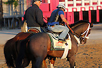 May 17, 2013. Trainer D. Wayne Lukas accompanies one of his three Preakness contenders, Oxbow, as the colt leaves the track after his morning gallop. (Joan Fairman Kanes/Eclipse Sportswire)