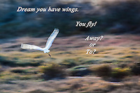 I dream I have wings.  I fly.  Fly away.   Or to?
