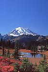 Blazing fall color below Natches Peak off Highway 410, Mt. Rainier National Park