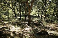 """Parque Natural """"Los Alcornocales"""": Suelo, humedad y aprovechamiento tradicional han sido los factores determinantes para mantener la mayor masa conservada y productiva de alcornocal de la Península Ibérica, el Parque Natural """"LOS ALCORNOCALES"""". Situado en la provincia de Cádiz y parte de Málaga, se extiende desde la sierra hasta el joven Parque Natural del Estrecho, presentando gran diversidad de relieves y paisajes. Esta riqueza se refleja en todos los ámbitos: flora, fauna, climatología, historia y folklore, constituyendo un lugar ideal para visitar y disfrutar de actividades tan diversas como la recolección de setas y la práctica de deportes en la naturaleza. El principal responsable de esta riqueza es el agua, presente en numerosos ríos, arroyos y embalses que, además de abastecer a la provincia, son aptos para la pesca y actividades recreativas. Pero sobre todo destaca la humedad proveniente de la costa, que se acumula formando bosques de niebla en valles estrechos y profundos denominados canutos. En este espacio habitan la cabra montés y numerosas aves rapaces, destacando el buitre leonado, alimoche, águila perdicera, búho real y halcón peregrino.En las laderas, aparece el matorral mediterráneo, con jaras, brezos, cantuesos, torviscos y majuelos. Por ellas discurre el corzo morisco, autóctono y emblema de caza mayor, además del gamo, ciervo y carnívoros como ginetas, tejones y sobre todo meloncillos, con la mayor población de la península. En un Parque tan completo y diverso, caben otras actividades, que van del montañismo en el pico del Aljibe o el Picacho; la espeleología en el enclave Ramblazo-Motillas, o el descenso de cañones en La Garganta de Buitreras, una de las pocas áreas preparadas para esta práctica de riesgo y que por su singularidad ha sido declarada Monumento Natural. Conviene completar la visita al Parque Natural con un paseo por los pueblos que lo conforman: CORTES DE LA FRONTERA, Jimena de la Frontera, Alcalá de los Gazules o Castellar de la"""