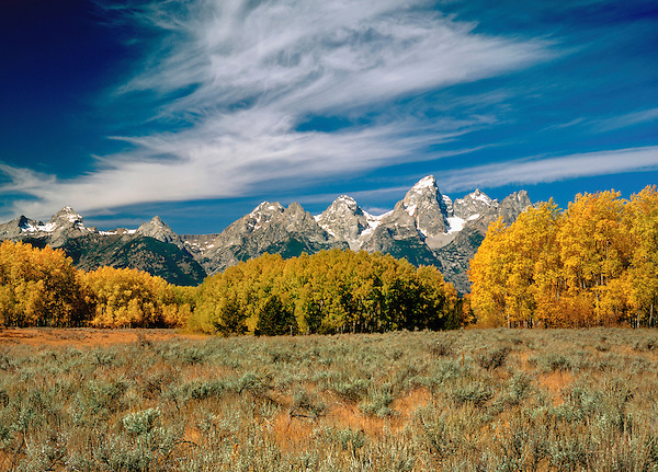 The Grand Teton and Aspen trees, Grand Teton National Park, Wyoming. John offers private photo tours in Grand Teton National Park and throughout Wyoming and Colorado. Year-round.