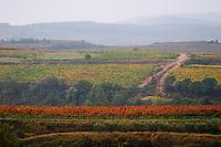 Vineyard view. Albet i Noya. Penedes Catalonia Spain