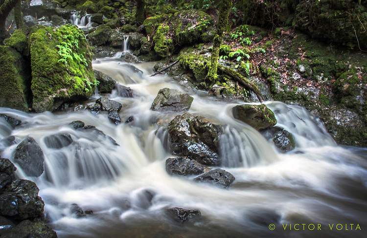 Cataract Creek, Mt. Tamalpais State Park