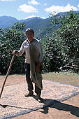 San Juan del Oro, Peru. Fair Trade farmer spreading coffee beans in  the sun to dry.