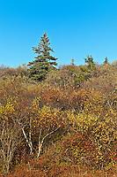 Acadia landscape, Mount Desert Island, Maine, ME, USA
