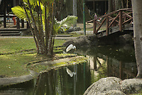 Garcas brancas vivem numas das maiores pracas Batista Campos de Belém, Pará, Brasil, foto de Arlan Conceicão
