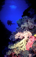 The Soft Coral Arch with a diver in Palau, Micronesia