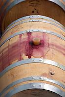 Oak barrel aging and fermentation cellar. Mas Igneus, Gratallops, Priorato, Catalonia, Spain.
