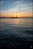 Statue of Liberty and flying birds in formation at sunrise.