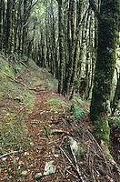 A tramping track near the Wangapeka Saddle on the Wangapeka Track - Kahurangi National Park