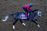 November 3, 2020: Knicks Go, trained by trainer Brad Cox, exercises in preparation for the Breeders' Cup Dirt Mile at Keeneland Racetrack in Lexington, Kentucky on November 3, 2020. John Voorhees/Eclipse Sportswire/Breeders Cup/CSM