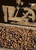 Europe/France/Midi-Pyrénées/46/Lot/Vallée du Lot/Larroque-Toirac: Séchage des noix