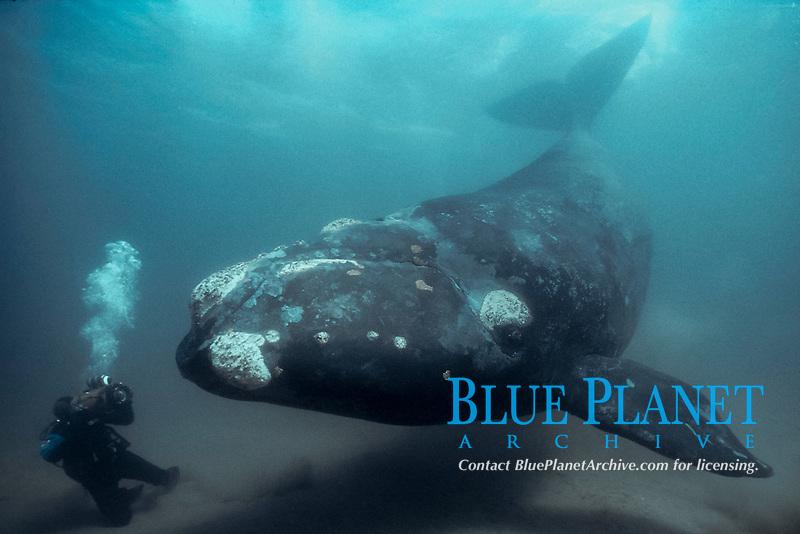 cameraman & southern right whale Eubalaena australis Patagonia, Argentina (S. Atlantic)