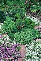 HS35-006a  Herb garden paths - Alyssum flowers - Lobularia maritima - herbs -sage, parsley, rosemary, thyme, dill, basil, marjoram, chives
