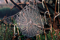A spider web covered with morning mist.