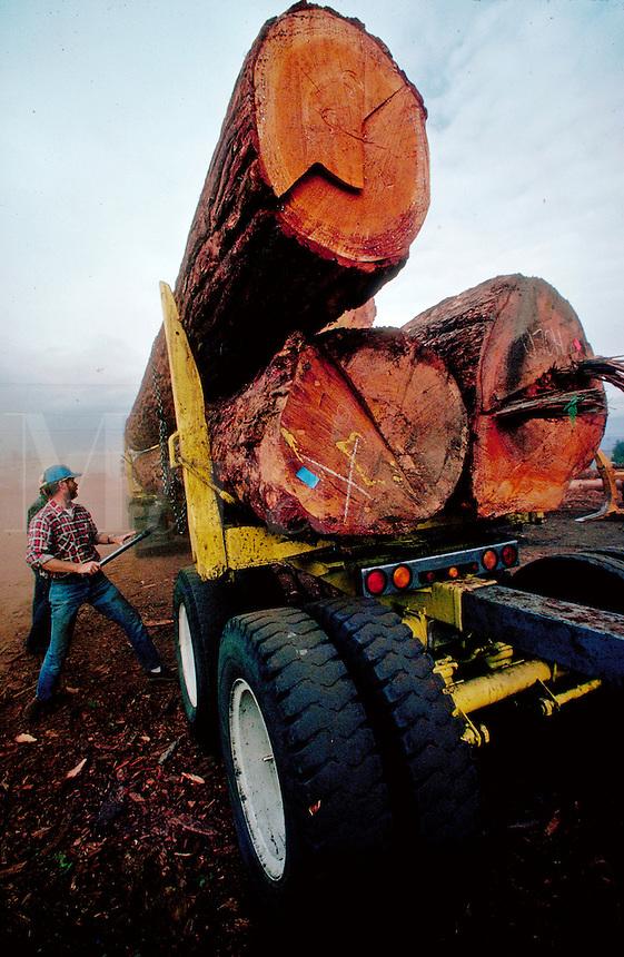 Loading logs on a lumber truck. Oregon.