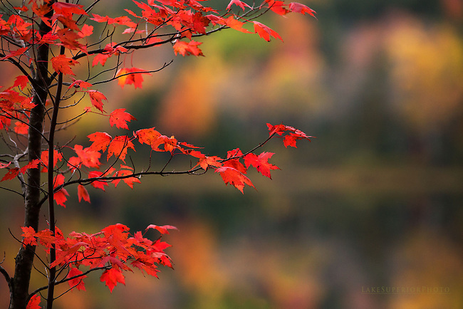 Red Maple, Autumn reflections, Upper Peninsula of Michigan