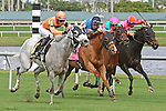 HALLANDALE BEACH, FL -DECEMBER 03:    #6 Spectacular Me (KY) with jockey Jose Ortiz on board wins the  $110K Claiming Crown Distaff Dash  Stakes at Gulfstream Park on December 03, 2016 in Hallandale Beach, Florida. (Photo by Liz Lamont/Eclipse Sportswire/Getty Images)