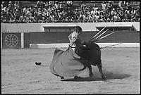 13 Juin 1976. Vue de la corrida de Espla dans les arènes de Toulouse.