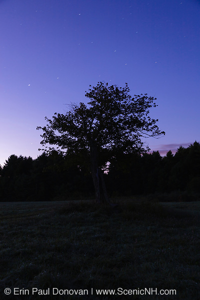 The silhouette of a forest during the night in New Hampshire USA.
