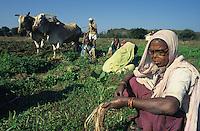 INDIA, Warora, Maharogi Sewa Samiti MSS, headquartered at Anandwan in Chandrapur district, project for people with leprosy, founded by Baba Amte, the motto of Baba Amte was: work builds, charity destroys / INDIEN, Warora, Maharogi Sewa Samiti MSS, Anandwan in Chandrapur Distrikt, Projekt fuer leprakranke Menschen, wurde vom Brahmanen Baba Amte gegruendet und wird heute von seinem Sohn Vikas Amte weitergefuehrt