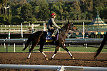 ARCADIA, CA  OCTOBER 26: Breeders' Cup Distaff entrant Ollie's Candy, trained by John W. Sadler, exercises in preparation for the Breeders' Cup World Championships at Santa Anita Park in Arcadia, California on October 26, 2019. (Photo by Casey Phillips/Eclipse Sportswire/CSM)