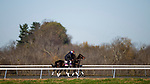 November 2, 2020: Madone, trained by trainer Simon Callaghan, exercises in preparation for the Breeders' Cup Juvenile Fillies Turf at Keeneland Racetrack in Lexington, Kentucky on November 2, 2020. Alex Evers/Eclipse Sportswire/Breeders Cup
