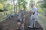 Sandy Cohen Observing Hanuman Langurs