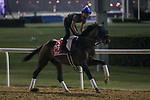 March 25, 2021: Dubai World Cup contender Jesus' Team trains on the track for trainer Jose D'Angelo at Meydan Racecourse, Dubai, UAE.<br />