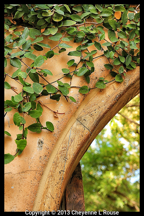 Arched Doorway with Ivy - Arizona