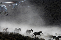 Dust rises from the dry rangeland as BLM contractors use two helicopters to gather almost 900 horses that have little food in the Nevada desert.<br />