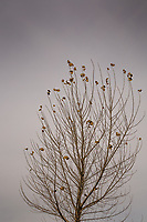 Scattered leaves, the last vestige of fall, cling to the barren limbs of a tree against a gray winter sky.