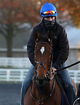 Into Mystic, trained by trainer Brendan P. Walsh, exercises in preparation for the Breeders' Cup Turf Sprint at Keeneland Racetrack in Lexington, Kentucky on November 2, 2020.