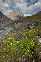 Creek that flows into the Marsh Fork of the Canning River in the Arctic National Wildlife Refuge in the Brooks Range mountains, Alaska.