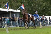 PAARDENSPORT: JOURE: 01-10-2018, Jouster Merke draverij, ©foto Martin de Jong