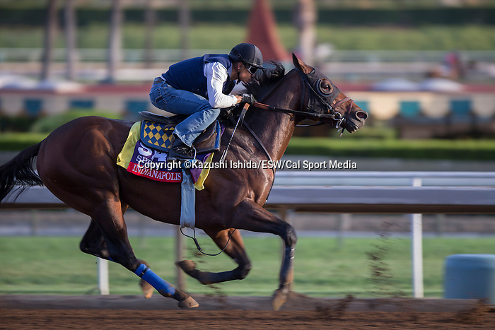 OCT 27 2014:Indianapolis, trained by Bob Baffert, exercises in preparation for the Breeders' Cup Xpressbet Sprint at Santa Anita Race Course in Arcadia, California on October 27, 2014. Kazushi Ishida/ESW/CSM