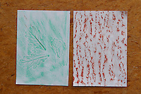 Fertige Rinden-Abdrücke und Blatt-Abdrücke von Eiche, Kinder, Kind machen Abdruck von Rinde, Baumrinde, Baum-Rinde und Blatt, dazu wird ein Blatt weißes Papier an den Stamm eines Baumes gelegt und mit Wachsmalstiften abgerubbelt. Unterschiedliche Rindentypen ergeben unterschiedliche Abdrücke