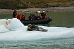 Phoque barbu devant le Glacier du 14 juillet